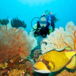Stock Photo: Triggerfish and diver
