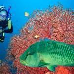 Scuba diver — Stock Photo #1838183