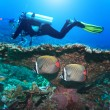 Diver and Angelfishes — Stock Photo