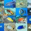 Set of 16 fishes — Stock Photo