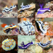 Stock Photo: Set of nudibranches