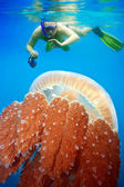 Snorkeling with jellyfish — Stock Photo