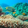 Underwater panorama - Foto de Stock  