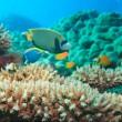 podvodní panorama — Stock fotografie