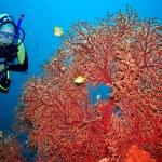 Scuba diver — Foto de Stock