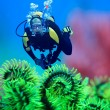 Diver underwater with feather starfish on foreground. Focus on diver — Stock Photo #1841826