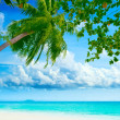 Palmtree on beach — Stock Photo #1842875