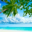 Palmtree on the beach — Stock Photo