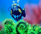Diver underwater with feather starfish on foreground. Focus on diver — Stock Photo