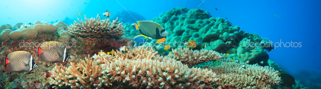 Underwater panorama with coral and fishes. Andaman sea. Merged from 5 images — Foto Stock #1840214