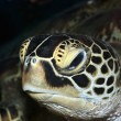 Turtle — Stock Photo #2276270
