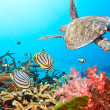 Butterflyfishes and turtle - Stockfoto