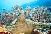 Turtle — Foto Stock
