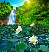 Lotus and waterfall — Stock Photo