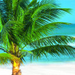 Palm tree — Stockfoto #2565100
