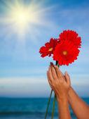 герберы ромашки цветок — Стоковое фото