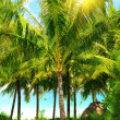 Tropical garden — Stock Photo