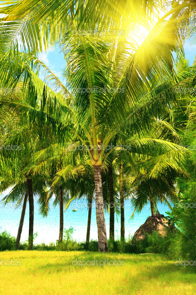 Tropical garden near the ocean — Stock Photo #2570750