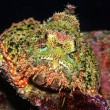 Scorpionfish — Stock Photo #2604604