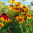 Stock Photo: Summer flowers