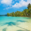 Coconut palms on the beach — Stock Photo #1592960