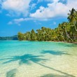 Coconut palms on the beach - Stock Photo