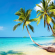 praia tropical — Foto Stock #1592977