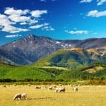 新西兰山风景 — 图库照片