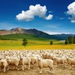 Royalty-Free Stock Photo: Herd of sheep