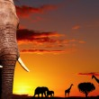 African nature concept — Stock Photo