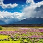 красивая долина — Стоковое фото
