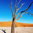 Stock Photo: Dead tree, Namib Desert, Namibia