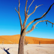 Dead tree, Namib Desert, Namibia - Stock Photo