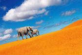 Desert fantasy, elephants walking — Stock Photo