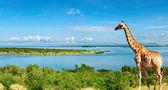 Nile river, Uganda — Stock Photo