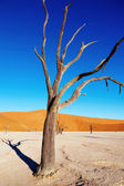 Dead tree, Namib Desert, Namibia — Stock Photo