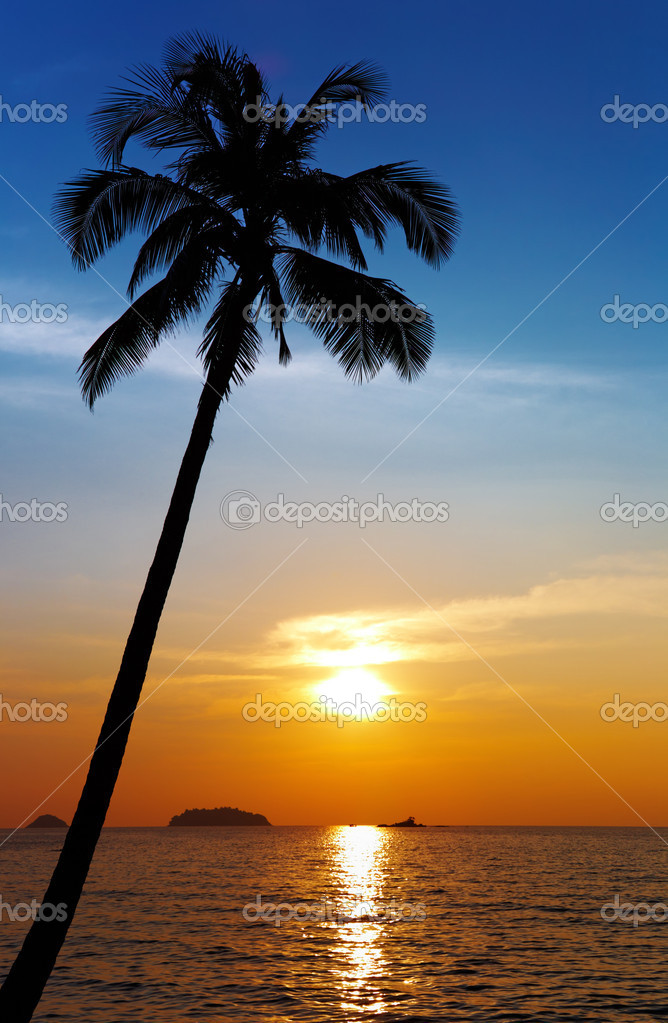 Palm tree silhouette at sunset, Chang island, Thailand — Stock Photo #1592941