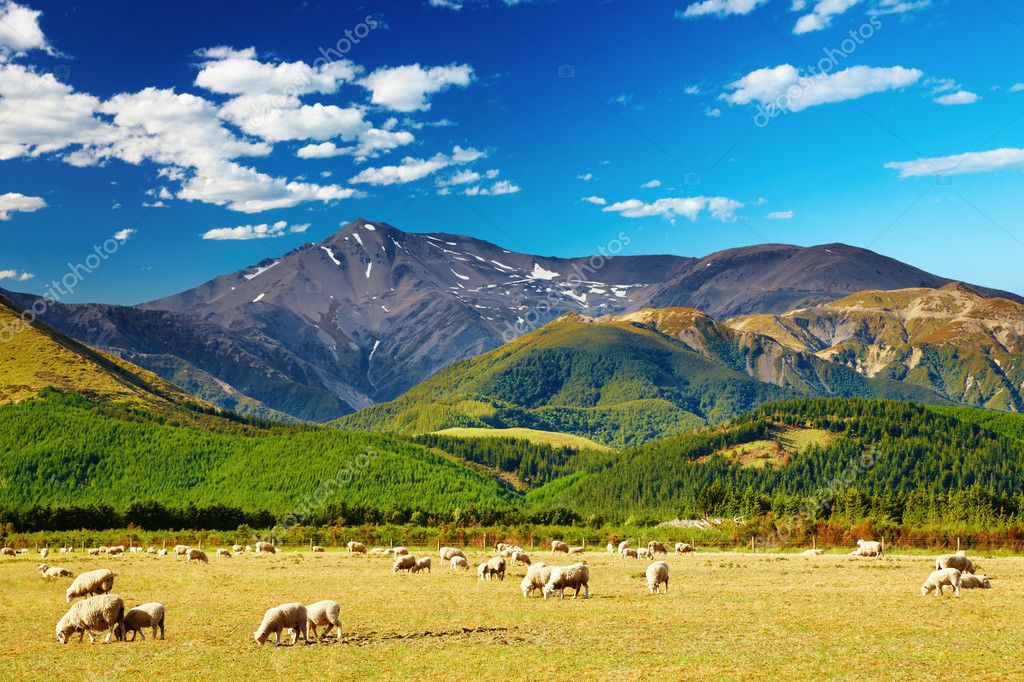 Mountain landscape with grazing sheep, New Zealand — Stock Photo #1593230