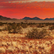 Kalahari Desert — Stock Photo
