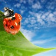 Ladybug on green leaf - Stock Photo