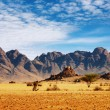 Namib Desert — Stock Photo #1611433