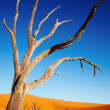Dead tree in Namib Desert — Stock Photo