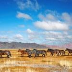 Running horses — Stock Photo #1620042