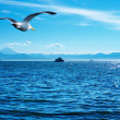 Flaying seagull - Stock Photo