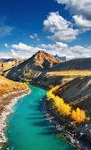 Mountain river Katun — Stock Photo