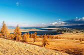 Mongolian landscape — Stock Photo