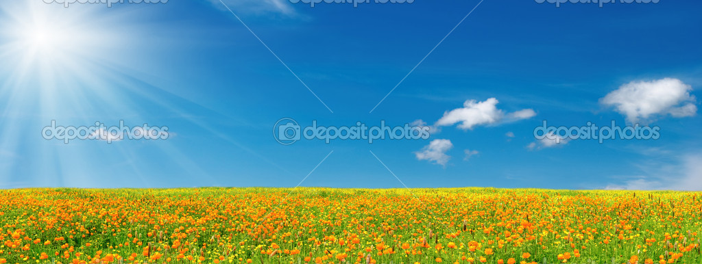 Blossoming field and blue sky  Stock Photo #1620300