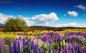 Beautiful valley — Stock Photo