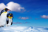 Two penguins in the snow — Stock Photo