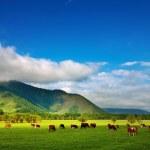 Grazing cows — Stock Photo #1700291